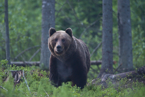Foto:Sven Zacek. Bear