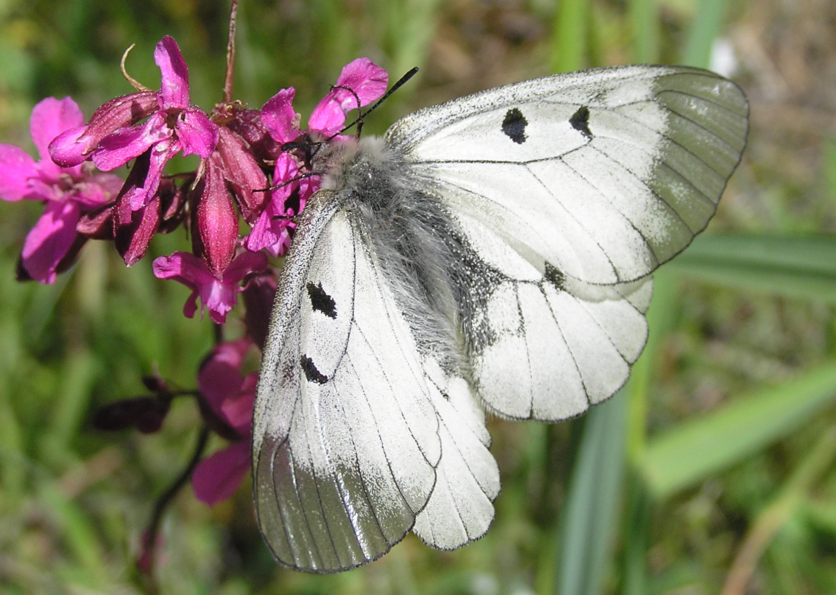 butterfly watching trip with estonian wildlife tours
