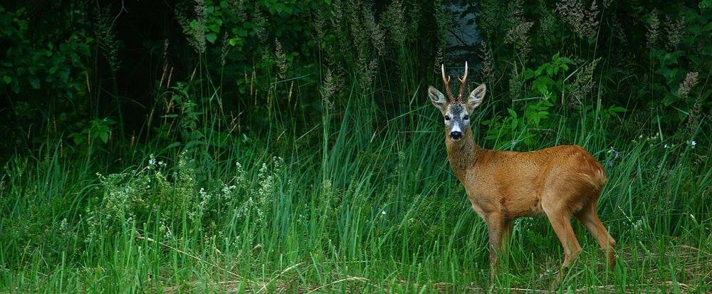 Mammal_photography_estonia